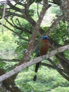 Tobago vogel