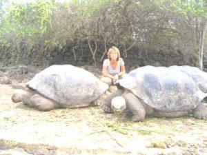 Landschildpadden