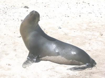 zeeleeuw strand